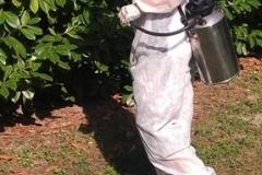 Efficacia adulticida su zanzare