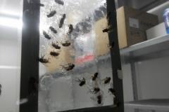 efficacia trappoline per mosche
