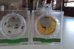 valutazione diverse superfici su mosca domestica con tubi WHO