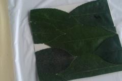 residualità  su vegetazione trattata in outdoor