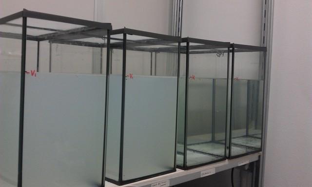 efficacia larvicidi su zanzare in condizioni di semicampo