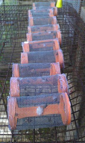 valutazione abbattenza e residualit� su mosca domestica