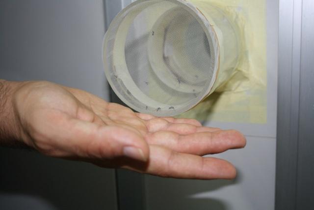 repellente portato testato con protocollo tube