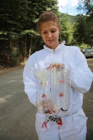 Test di campo repellente per vespe  Patagonia  Argentina  2016